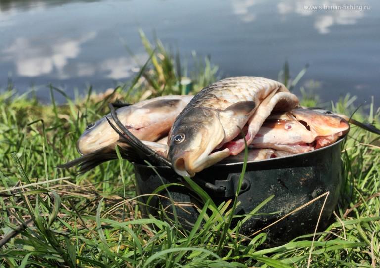 рыбалка в тишине